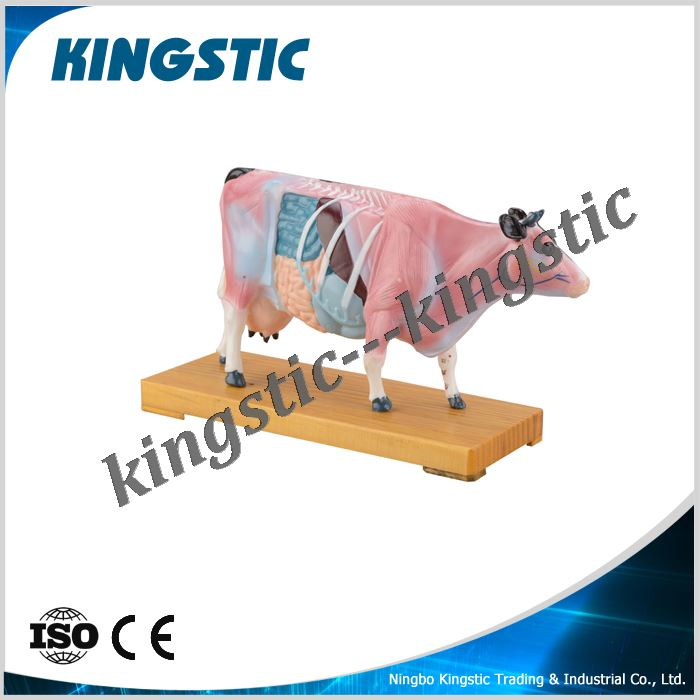 cmb-901d-cattle-acupuncture-model