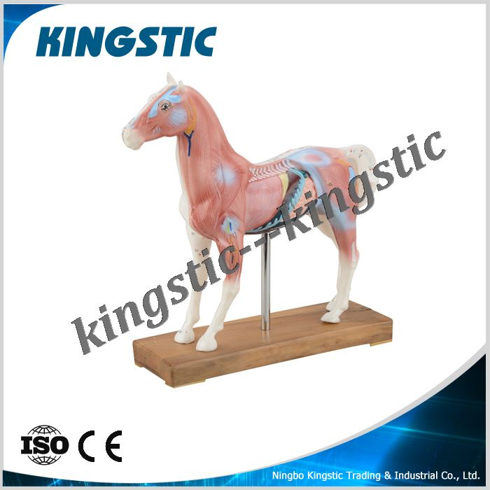 cmb-901e-horse-acupuncture-model